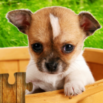 Dogs Jigsaw Puzzles Game – For Kids & Adults 🐶  MODs APK 28.5