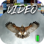 Alive Video Wallpapers MODs APK