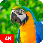 Parrot Wallpapers 4K 5.3.2 MOD